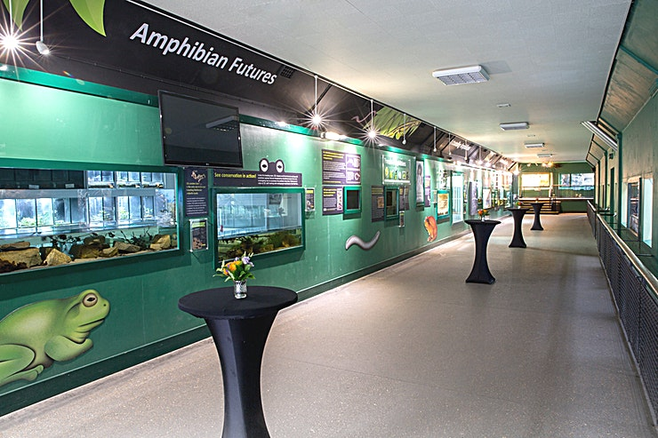 Amphibian and Reptile House **Hire the Amphibian and Reptile House at ZSL London Zoo for a truly unique London venue to hire!** 